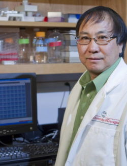 Description: Zhen Fang  Fu Environmental portrait of Zhen Fang  Fu in his lab.  Date of Photo: 1/24/2011 Credit: Peter Frey, University of Georgia Photographic Services File: 27428-007  The University of Georgia owns the rights to this image or has permission to redistribute this image. Permission to use this image is granted for internal UGA publications and promotions and for a one-time use for news purposes. Separate permission and payment of a fee is required to use any image for any other purpose, including but not limited to, commercial, advertising or illustrative purposes. Unauthorized use of any of these copyrighted photographs is unlawful and may subject the user to civil and criminal penalties. Possession of this image signifies agreement to all the terms described above.